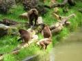 ZOO Zlín Opice P1090715